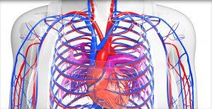Angiologia e angiologista